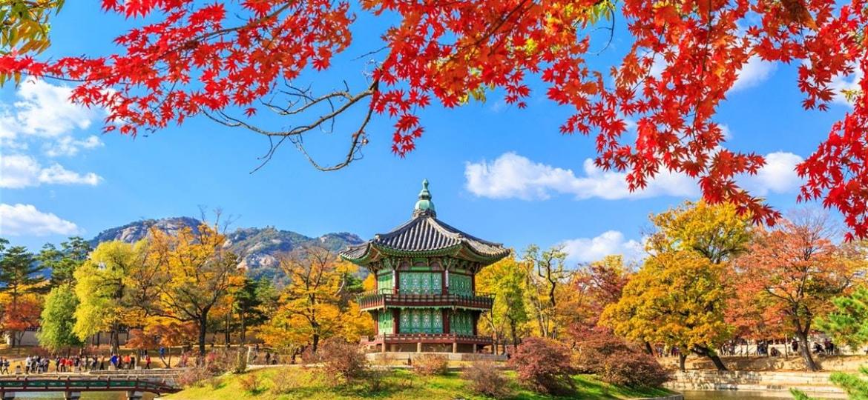 Koreja sajt